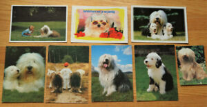 8 Used DUTCH Postcards & stamps OLD ENGLISH SHEEPDOGS