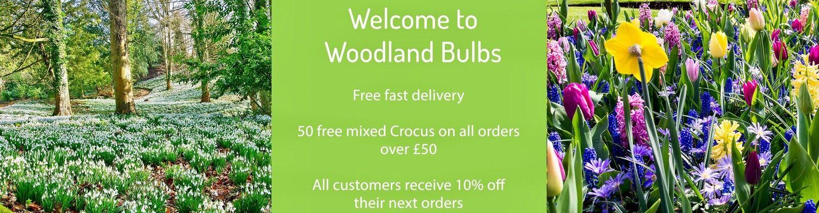 The Woodland Bulb Company