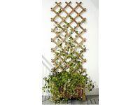Ikea Garden Tables x 2 ikea garden Trellis x 2