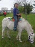 PONY RIDES-Birthday Party-Schools-Fairs-Daycares  (204) 663-1000