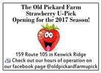 Strawberry UPick--Keswick Ridge