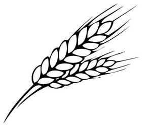 Wheat Drawing Image is loading wheat-set-of-Wheat Drawing
