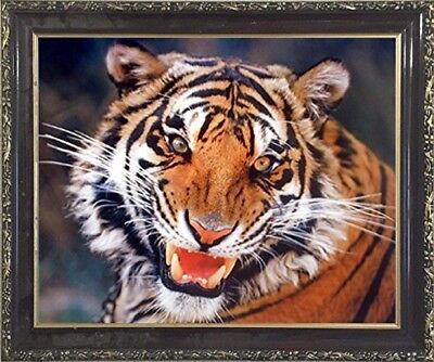Tiger Angry Face David Boyle Nature Wildlife Animal Wall Decor Framed Picture (Angry Face Painting)