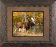 Wildlife Prints Framed