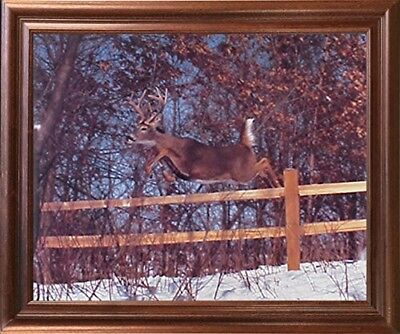 Demented Whitetail Deer Jumping Fence Wildlife Animal Wall Art Decor Framed Portray