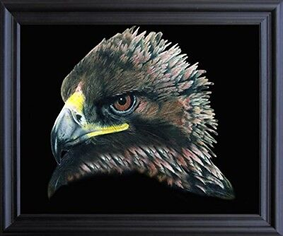 American Bald Eagle Bird Picture Wall Decor Black Framed Art Print Picture 19x23