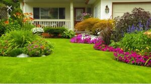 Lawn Care and Related Service