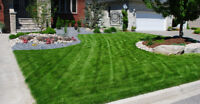 CHEAP SPRING LAWN MAINTENANCE! EXPERIENCED & PROFESSIONAL. CALL