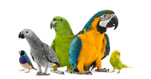 Lost/Found group for pet birds