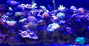 New corals arrived Feb 23, 2017,