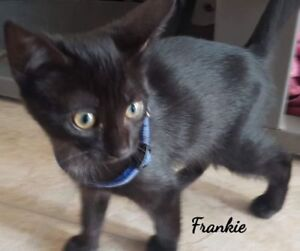 Frankie is looking to be adopted!