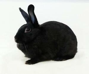 "Adult Female Rabbit - American: ""April"""