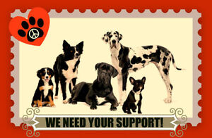 OUR DOG RESCUE NEEDS FOSTER FAMILIES