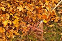 Lawn Fall Clean-Up