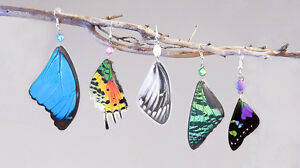 Hand made jewelery made from butterflies and insects wings