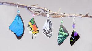 boucles d'oreille a base de vrai papillon et autre insecte