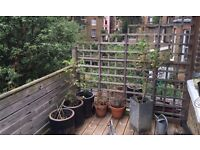 Stunning 2 bed with roof terrace in Holloway / Tufnell Park N7