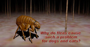 Fleas infesting your pets and Dwelling - Advantage II Eq- 24.90