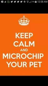 MICRO CHIPPING & SCANNING IN CWMBRAN!