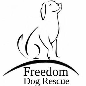 Dog rescue in need of items please