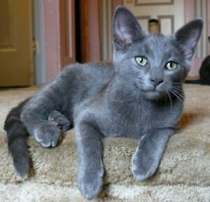 Artrius available for adoption