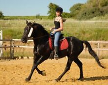 Wanted: Free/Low Cost horse/pony for on property lease Iluka Joondalup Area Preview