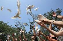 Sydney White Doves at their Funeral,Release Dove ceremony Dural Hornsby Area Preview