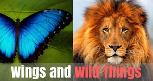 African Lion Safari and Cambridge Butterfly Conservatory Package