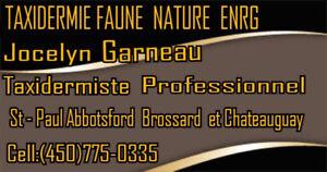 Service de taxidermie à Brossard ,Chateauguay, et granby st paul