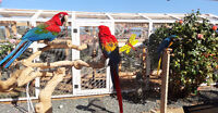 Parrot Boarding at Too Crazy Birdy Hotel - canaries too!