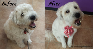 Grooming find or advertise pet animal services in kitchener bright and cheerful pet grooming in kitchener solutioingenieria Choice Image