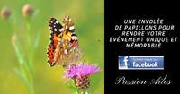 Envolée de papillons pour mariage