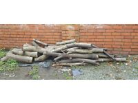 Sycamore Tree Logs Hardwood