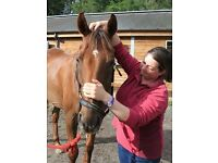 Trish Robson - Equine Sports Massage Practitioner