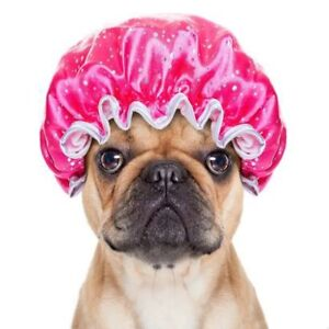Dog Grooming and Pet Sitting in Enchant-Lomond-Vauxhall Area
