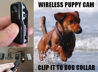 Wireless Pet Dog Video Camera Recorder Cam Video Color Audio Sound Collar Leash
