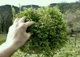 Moss for hanging baskets/ christmas wreath 5kg Free postage