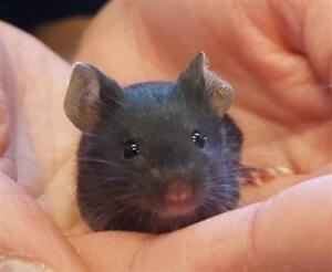 "Baby Male Small & Furry - Mouse: ""Bo"""
