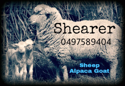 Sheep Shearing Alpaca Goat