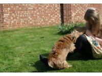 Experienced dog walker / sitter in Bushey