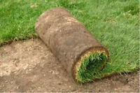 FALL SOD SPECIAL $1.00 SQ/FT FREE ESTIMATES BOOK NOW!!!