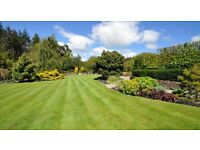 Allwood landscapes & gardening 25years experience gardener