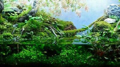 Musgo vivo verde natural planta de acuario para orquideas bonsais carnivoras