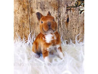 Mini rex - Available now
