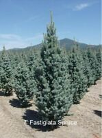 Buy Direct from the tree farm at wholesale prices