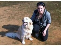 Shadwell Pet Care - Friendly Dog Walking & Pet Sitting Service covering North Leeds