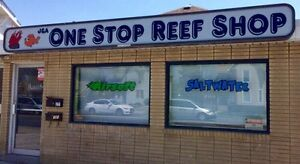 ONE STOP REEF SHOP - SALTWATER FISH, CORALS & INVERTS!
