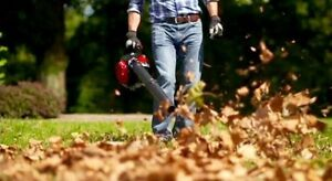 Professional Leaf Removal  London Ontario image 1