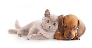 Cat and Dog Dry Foods Brand Names
