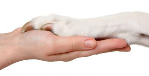 Nail Trims & Special Needs Pet Care by Vet Tech!